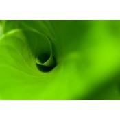 Greens (14)