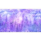 Purples (15)